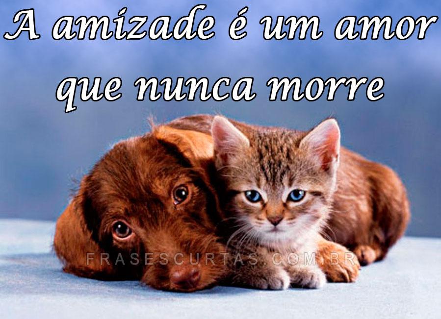 A amizade e um amor que nunca morre!!!