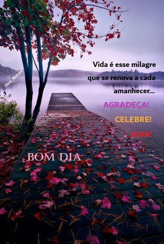 Vida é esse milagre que se renova a cada amanhecer… Agradeça! Celebre! Viva!